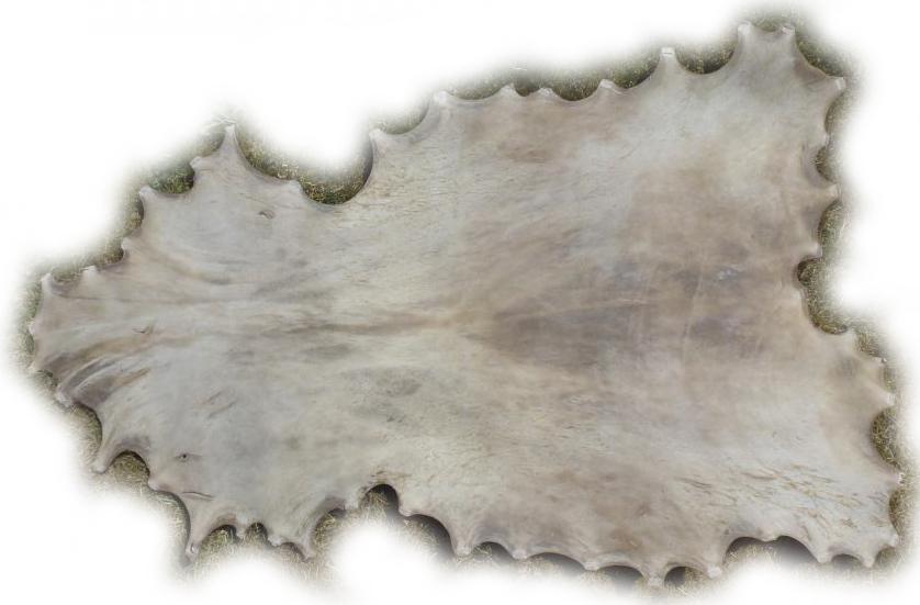 Damhirschrohhaut Rückseite