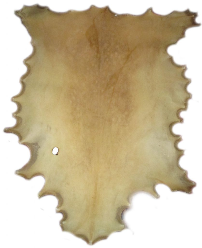 Damhirschrohhaut