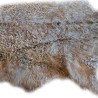 Galloway grau-beige gelockt