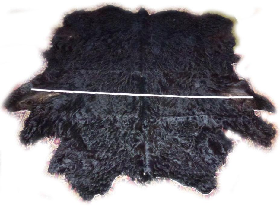 Galloway schwarz Breite
