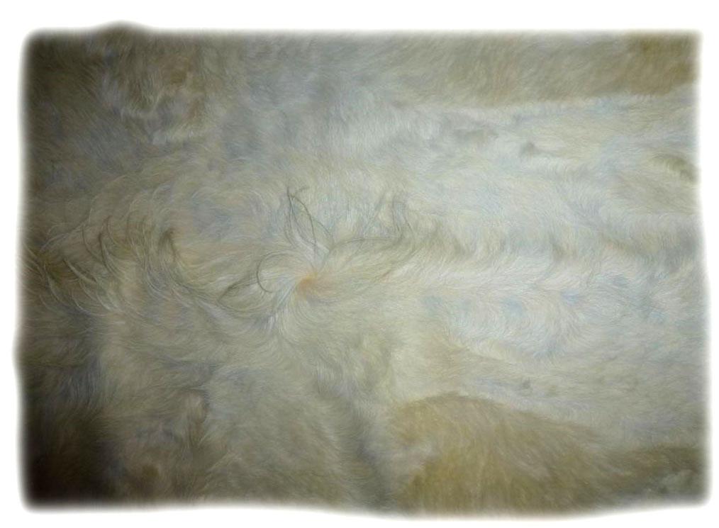 Gallowayfell Detail des Nackenhaares