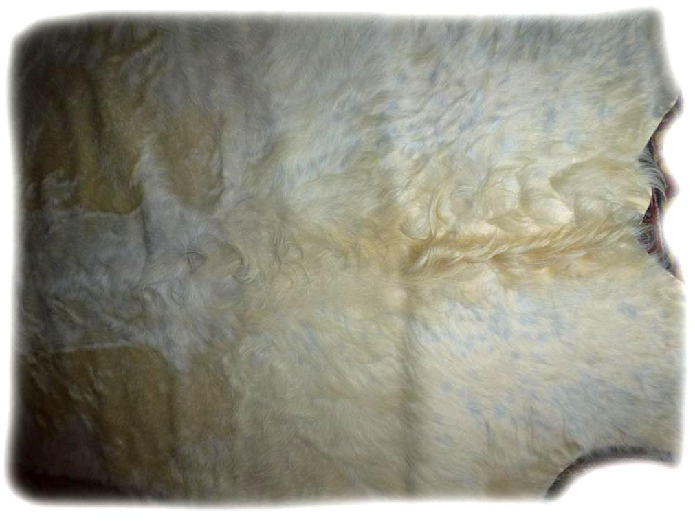 Gallowayfell Detail Rückens