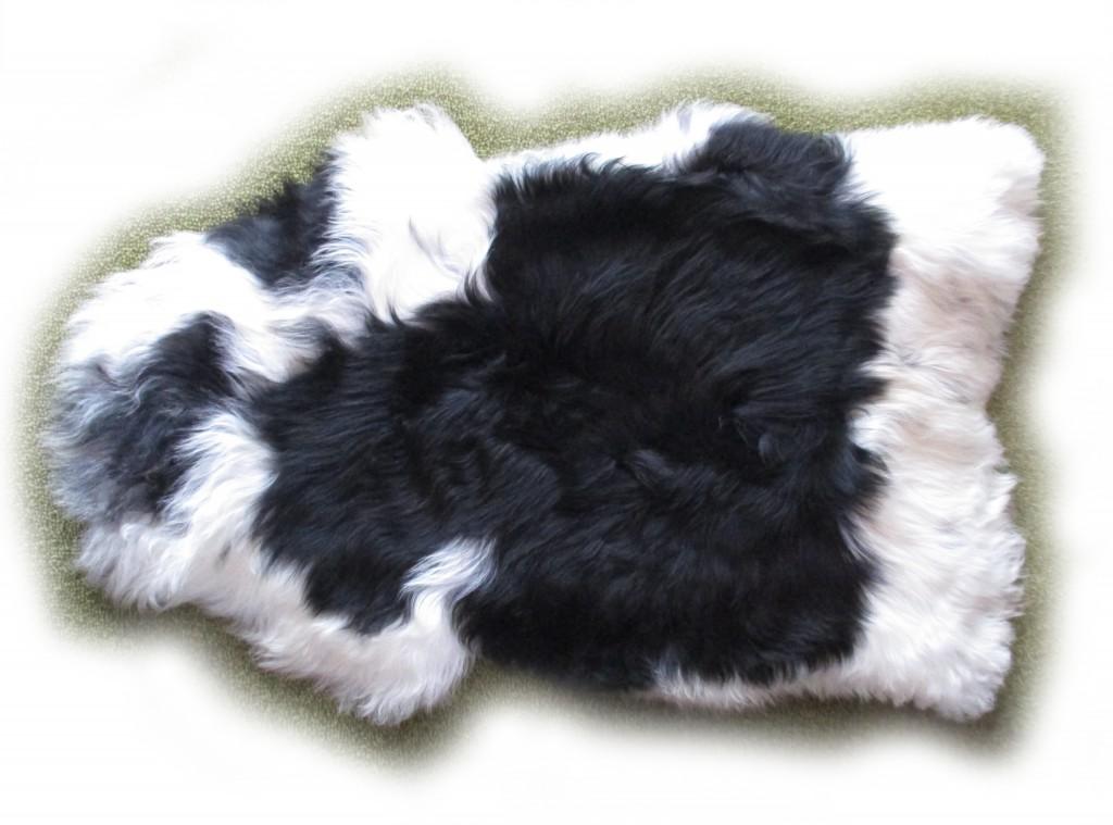Islandschaf schwarz-weiß