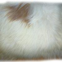 Islandschaffell naturfarben weiß-braun