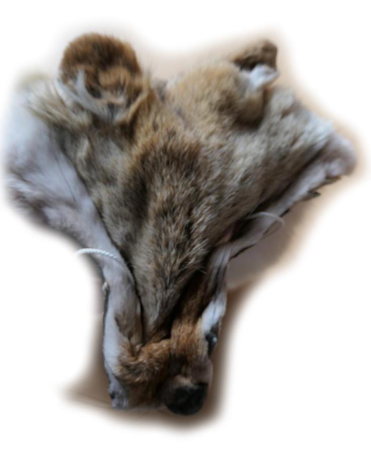 Kojote 200401 Gesichtchen