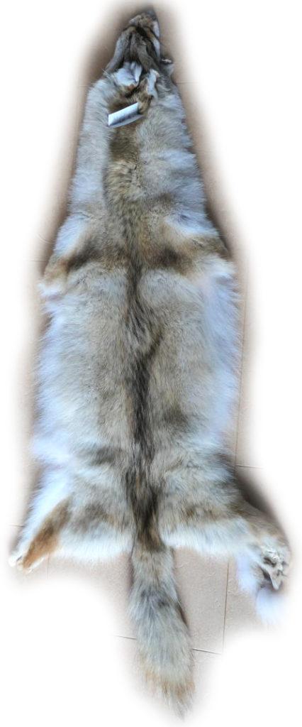 Kojote Gesamtlänge