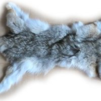 Kojote Gesamtansicht