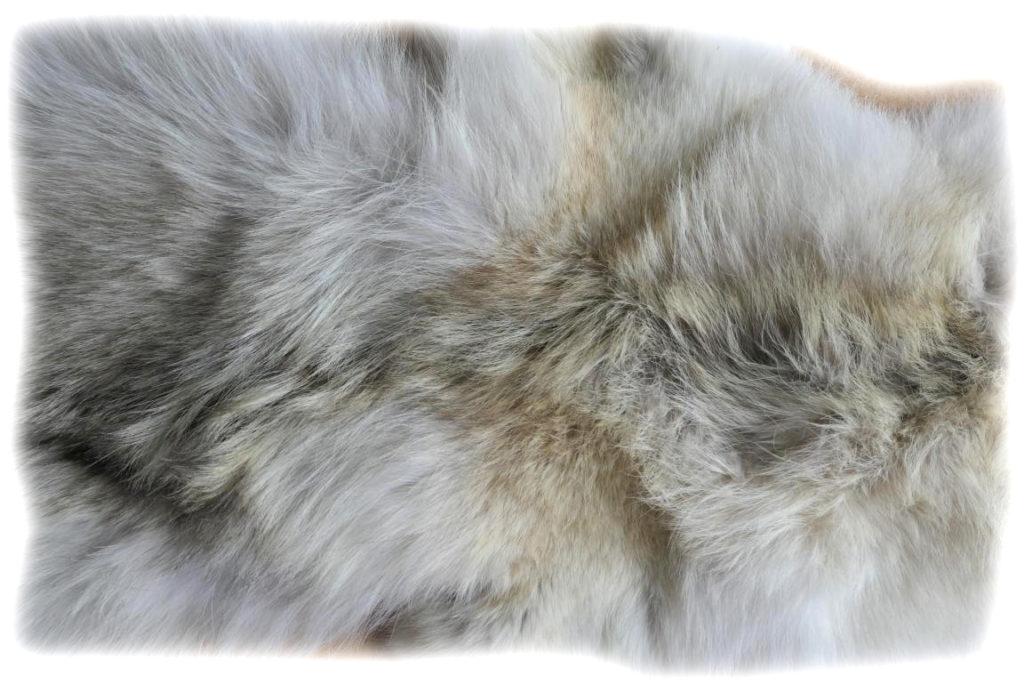 Kojote Detail
