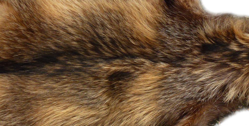 Marderhund Rückendetail