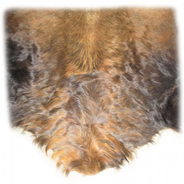 Nackenbereich des Auerochsen