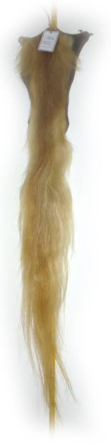 Pferdeschweif-blond-120-cm
