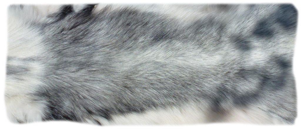 Platinfuchs Rückendetail