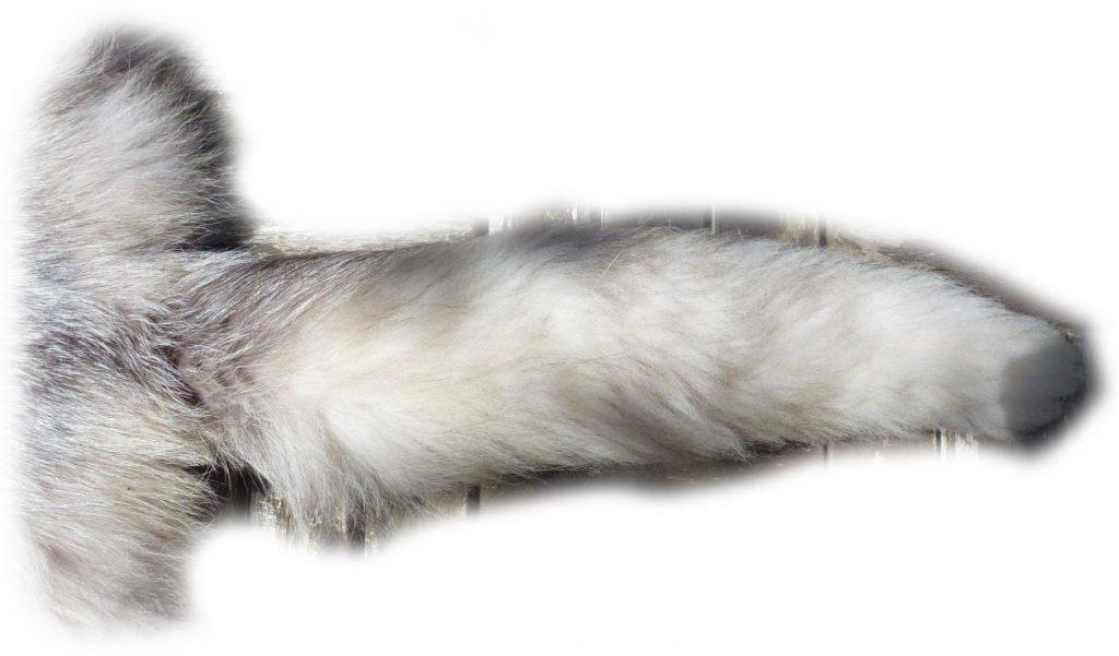 Platinfuchs Schwanzdetail