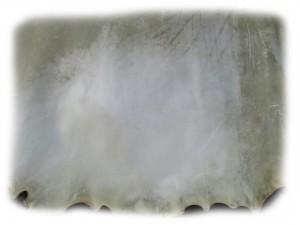 Detailansicht einer Stierrohhaut