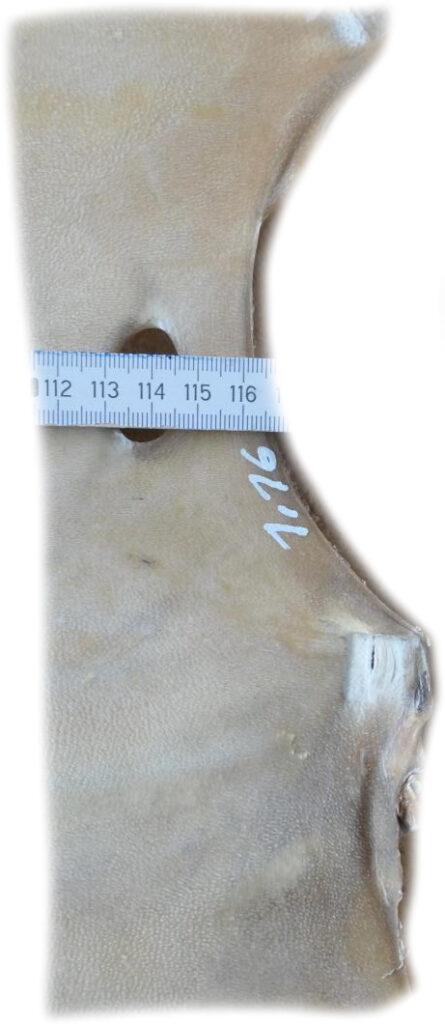 Rothirschrohhaut116 Länge