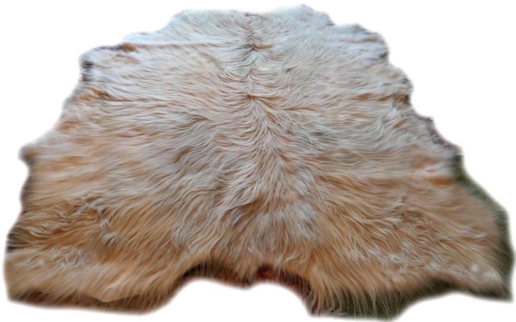 Schottisches Hochlandrind beige 2004185