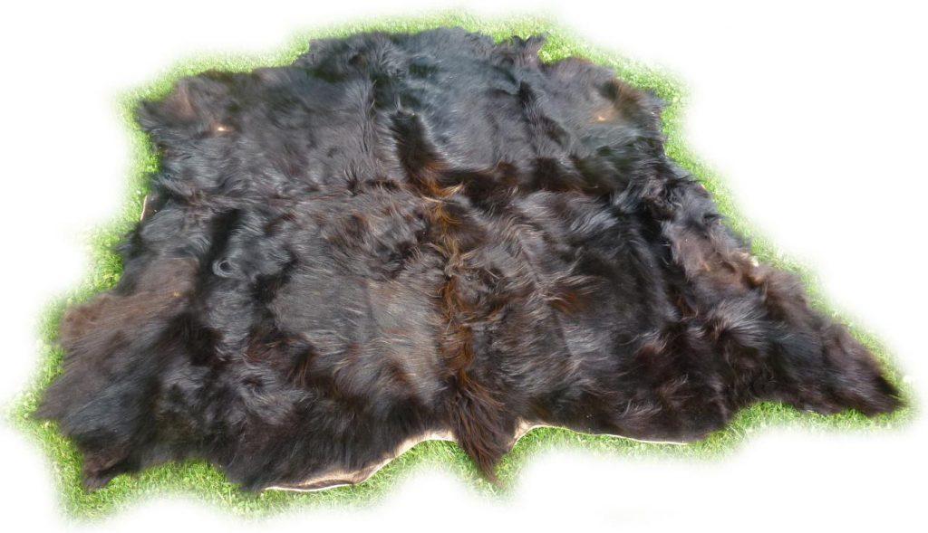 Schottisches Hochlandrind schwarzbraun Gesamtansicht von hinten