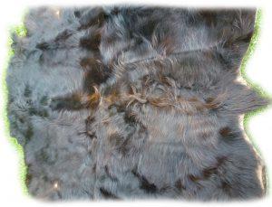 Schottisches Hochlandrind schwarzbraun Rücken