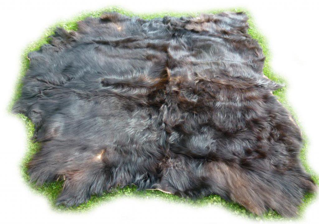Schottisches Hochlandrind schwarzbraun Seitenansicht