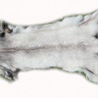 200910 Blaufuchs 136 cm