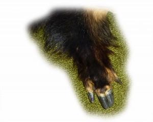 Wildschweinbein 4 freigestellt