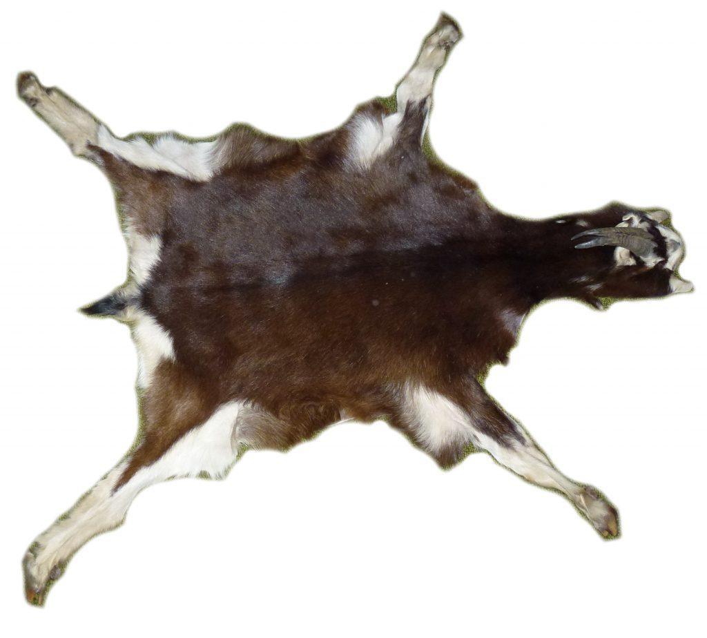 Ziegenfell mit Hufen und Hörnern