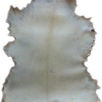 Ziegenrohhaut